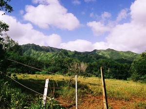 Big Island Fine Art Photography-Kauai Hillside