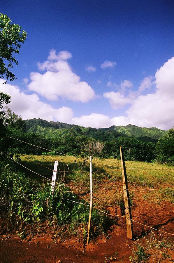 Kauai Landscape, film